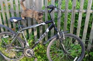 Наступает сезон велосипедных краж