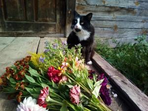 кот Вася