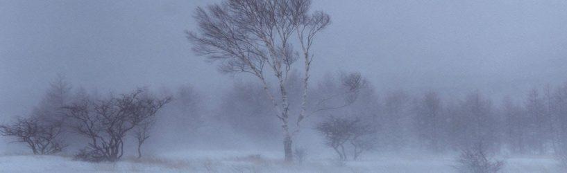 В Ивановской области ожидается усиление  ветра