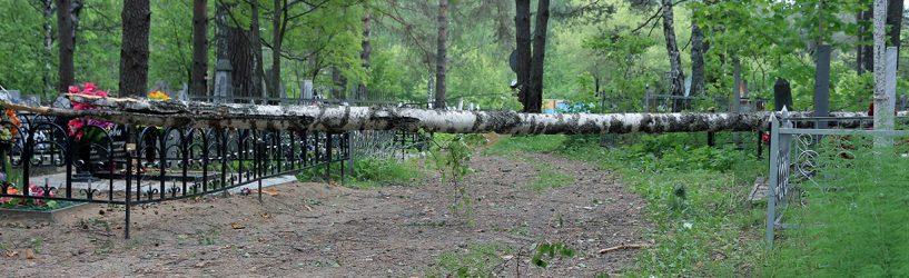 В Южском районе ураганный ветер ронял деревья и обрывал провода (ФОТО)