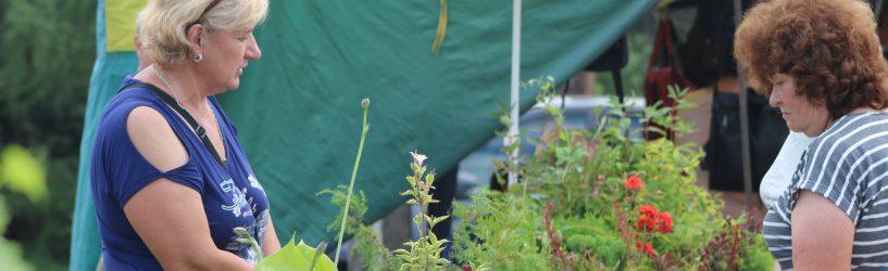 Участвуйте в конкурсе и получите в подарок набор луковичных растений!