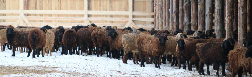 В Южском районе открылась животноводческая ферма