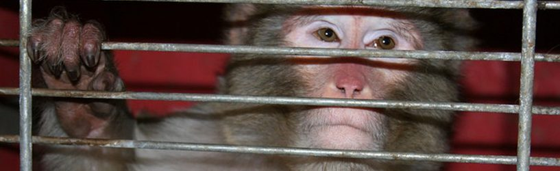 Гастроли цирка-шапито в Юже завершились укусами обезьяны