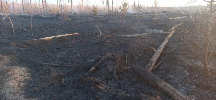В Южском районе зарегистрирован лесной пожар